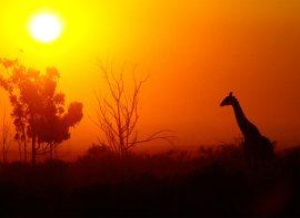Luxury holiday accommodation in Pilanesberg