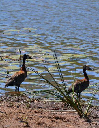 Mabilingwe Nature Reserve